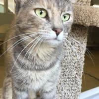 Adopt A Pet :: Kiara - Bartlesville, OK