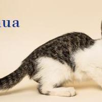 Adopt A Pet :: Joshua Kelly - Fairhope, AL