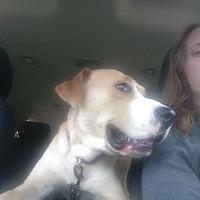 Adopt A Pet :: Boston - Fort Scott, KS