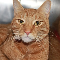 Adopt A Pet :: DARRIUS - Clayton, NJ