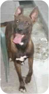 German Shepherd Dog Mix Dog for adoption in Bunnell, Florida - Jenna