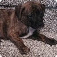 Adopt A Pet :: George - Washington, NC