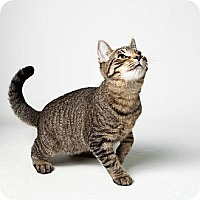 Adopt A Pet :: Speedy - Rockaway, NJ