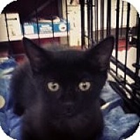 Adopt A Pet :: George - Riverside, RI
