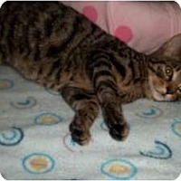 Adopt A Pet :: Beamer - Acme, PA