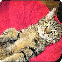 Adopt A Pet :: Opal - Warminster, PA