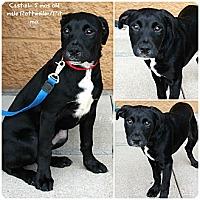 Adopt A Pet :: Castiel - Evansville, IN