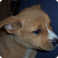 Adopt A Pet :: Minnie me-adoption in progress - Marshfield, MA