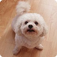Adopt A Pet :: Monet - East Hanover, NJ
