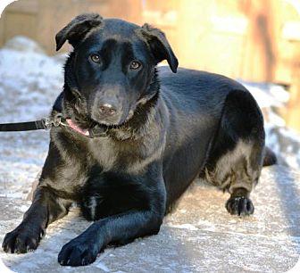 German Shepherd Dog/Labrador Retriever Mix Dog for adoption in Point Pleasant, Pennsylvania - BETTY