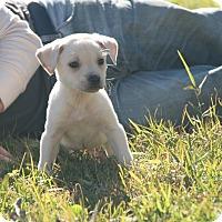 Adopt A Pet :: Jaume - Destrehan, LA