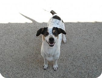Bluetick Coonhound Mix Dog for adoption in Dover, Tennessee - Duke