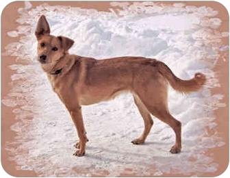 Terrier (Unknown Type, Medium) Mix Dog for adoption in Howell, Michigan - Maple