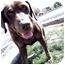 Photo 1 - Coonhound/Labrador Retriever Mix Dog for adoption in Meridian, Idaho - Rocky