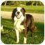 Photo 2 - Border Collie Dog for adoption in Overland Park, Kansas - Dakota