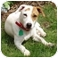 Photo 2 - Jack Russell Terrier Mix Dog for adoption in Dunkirk, New York - Shelby