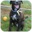 Photo 1 - Labrador Retriever Mix Dog for adoption in kennebunkport, Maine - Artie - Pending!