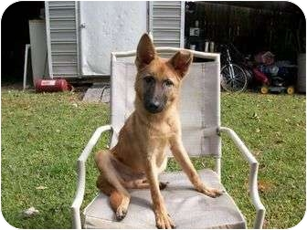 Rosco | Adopted Puppy | Litchfield, CT | Belgian Malinois ...