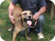 Bloodhound Mix Dog for adoption in Henderson, North Carolina - Whoodini