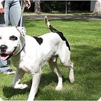 Adopt A Pet :: Gordo - Medicine Hat, AB