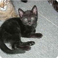 Adopt A Pet :: Maryanne - Davis, CA