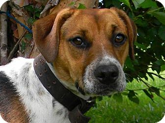 Hound (Unknown Type) Mix Dog for adoption in Tyner, North Carolina - Dot-Dot