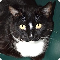 Adopt A Pet :: Sassy - Eastsound, WA