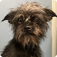 Adopt A Pet :: LIL BIT - Rancho Palos Verdes, CA