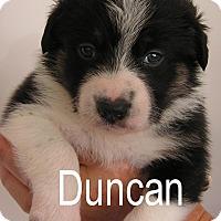 Adopt A Pet :: Duncan - Normandy, TN