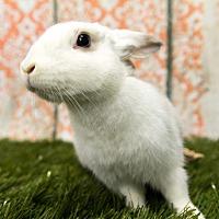 Adopt A Pet :: Mimi - San Diego, CA