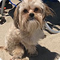 Adopt A Pet :: Snacks - Los Angeles, CA