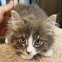 Adopt A Pet :: Geraldo - Glendale, AZ