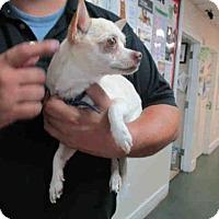 Adopt A Pet :: BLAKE - Fort Walton Beach, FL