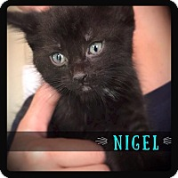 Adopt A Pet :: Nigel - Hartford City, IN