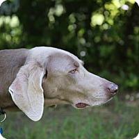 Adopt A Pet :: Alice - Wagener, SC