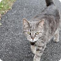 Adopt A Pet :: Skye - Islip, NY