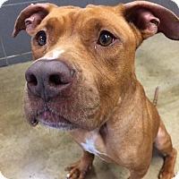 Adopt A Pet :: Parker - Jackson, MI