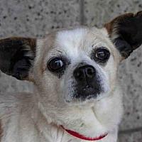 Adopt A Pet :: MANNY - Lompoc, CA