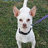 Adopt A Pet :: Olaf - Joliet, IL