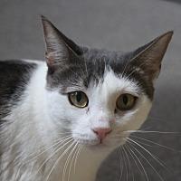Adopt A Pet :: Harlem - Sarasota, FL
