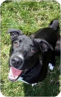 Labrador Retriever Mix Dog for adoption in Phoenix, Oregon - Happy