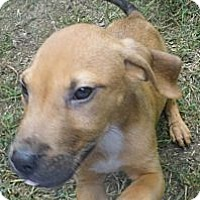 Adopt A Pet :: Jet - Jarrettsville, MD