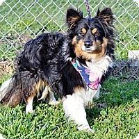 Adopt A Pet :: Benny - La Habra, CA
