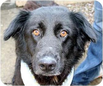Labrador Retriever Mix Dog for adoption in Cincinnati, Ohio - Black
