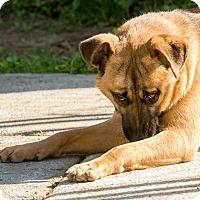 Adopt A Pet :: Weatherbee - El Campo, TX