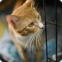 Adopt A Pet :: Gabriel - New Orleans, LA