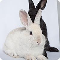 Adopt A Pet :: Saturn - Los Angeles, CA