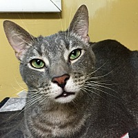 Adopt A Pet :: Scar - Wilmington, DE