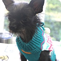 Adopt A Pet :: Stella - Norwalk, CT