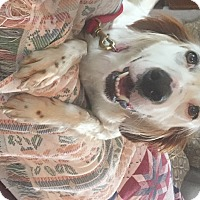 Adopt A Pet :: MYSTIC - Pine Grove, PA